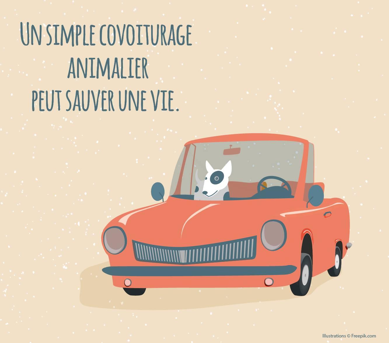1 animal 1 famille : un simple covoiturage animalier peut sauver une vie et vous permettre adopter un animal