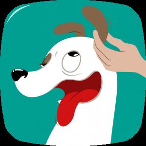 nettoyage oreille chien massez la base de l'oreille délicatement bien-être