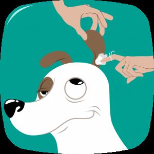 nettoyer oreille chien séchez le conduit auditif bien-être