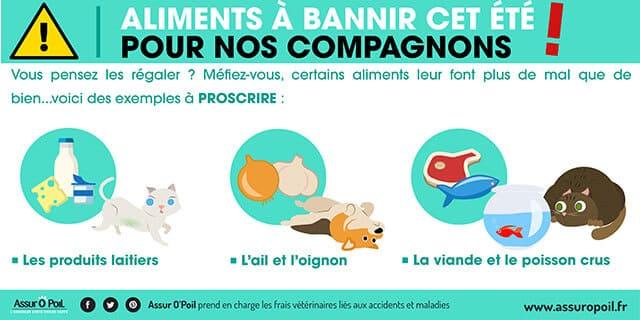 Alimentation : Aliment dangereux chien et chat