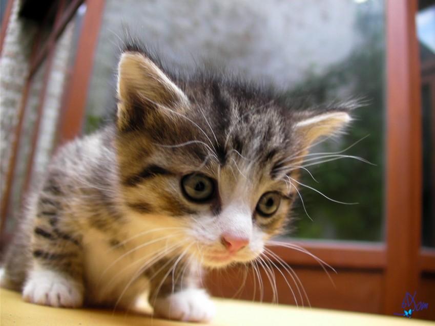 ePartir en vacances avec son chat: bonne ou mauvaise idée ?