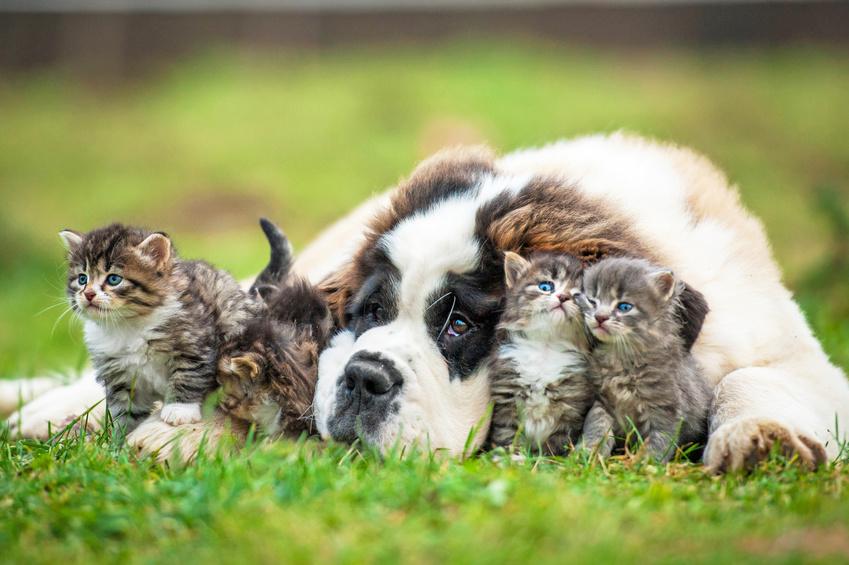 Phytothérapie pour chien et phytothérapie chat Mutuelle Animaux Assur O' Poil assurance chien et assurance chat
