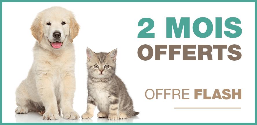 2 mois offerts pour toute souscription d'une assurance animaux