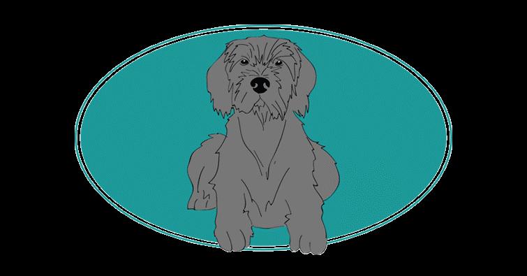 pudelpointer-toutes-les-races-de-chiens-assuropoil