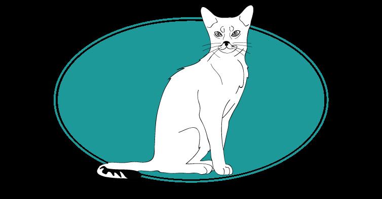 Abyssin chat animal races : tout savoir sur les chats, races de chats