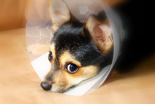 accident-assurance-chien-assuropoil