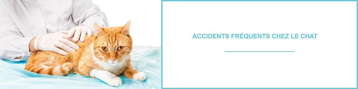 Accidents fréquents chat : découvrez les accidents les plus fréquents chez le chat