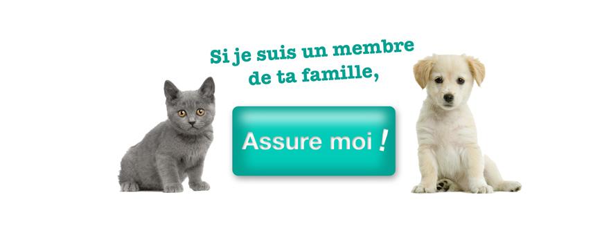 La zoothérapie : comment se soigner grâce à nos animaux de compagnie