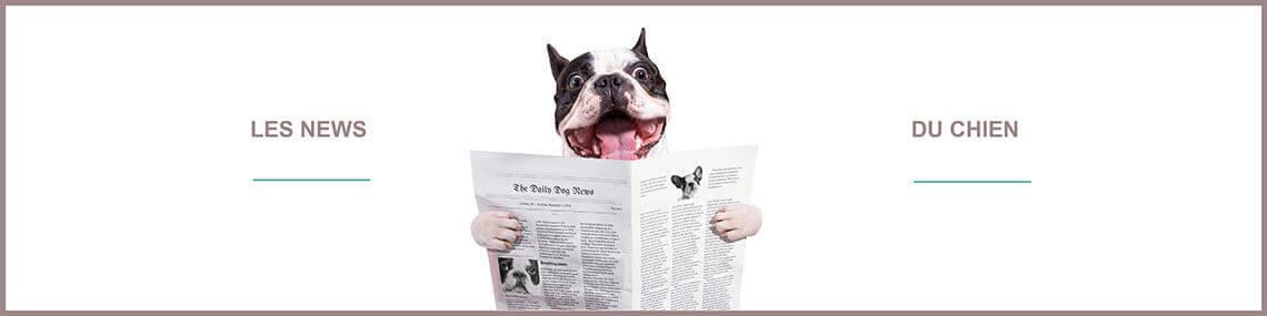 Actu chien : toutes les news des chiens sur ce blog