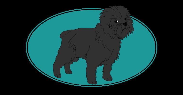 affenpinscher : toutes les races de chien, chien races