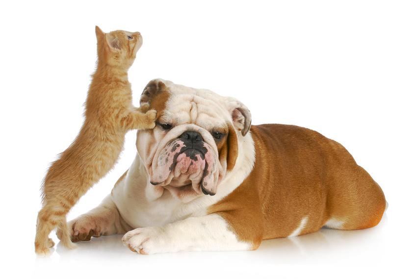 Age du chien, age du chat : assurer son animal sans connaitre son âge