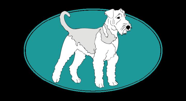 Airedale Terrier : : toutes les races de chien, chien races