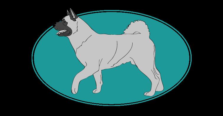 Akita américain : toutes les races de chien, chien races, mutuelle animaux