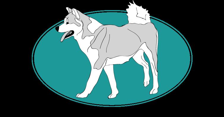 akita-inu-assuropoil