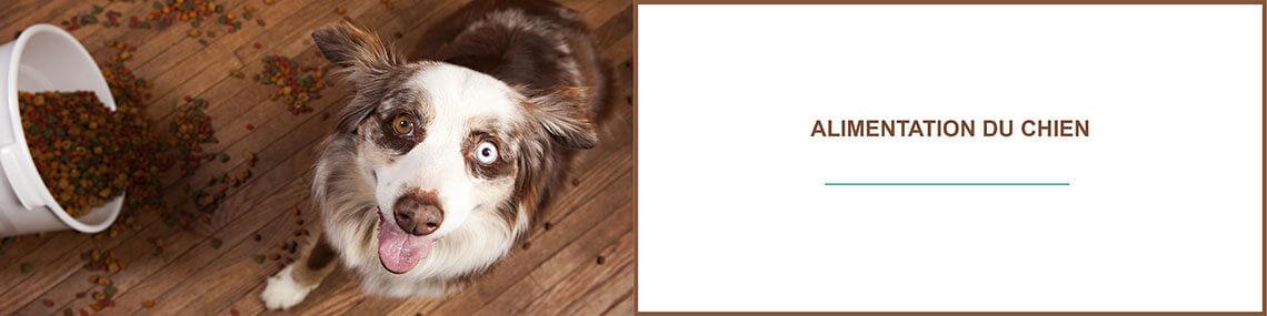 Alimentation chien : tout sur l'alimentation et nourrir son chien