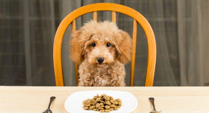 Mon chien ne mange plus : Alimentation