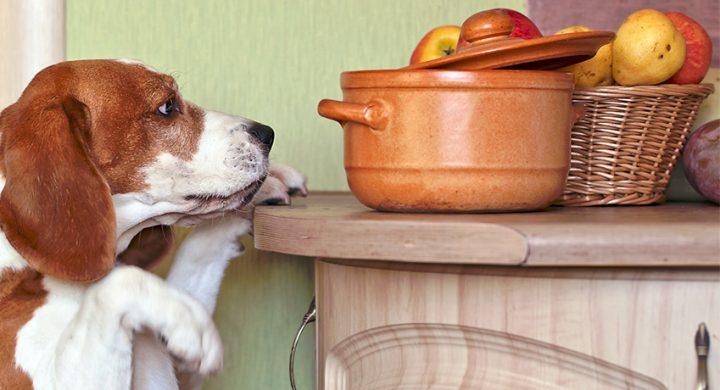 Alimentation chien : Orange fruits pour chien, mon chien peut-il manger des oranges