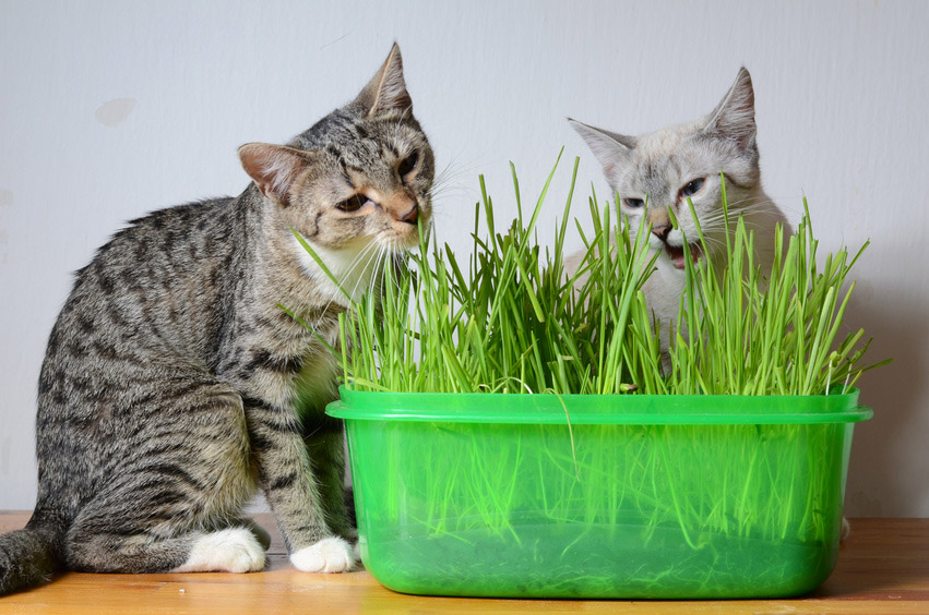 Alimentation Naturelle Chat : Nourriture
