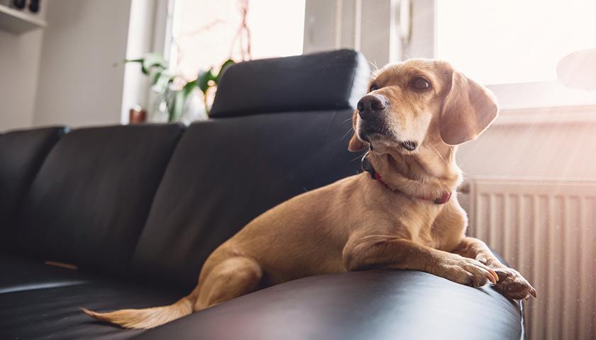 Aliments, produits domestiques dangereux pour les chiens