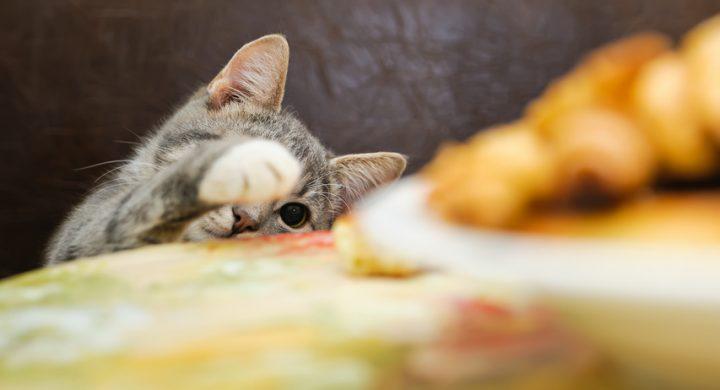 Aliments Toxique Chat : Nourriture