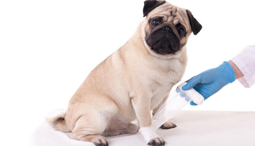 tumeur langue chien
