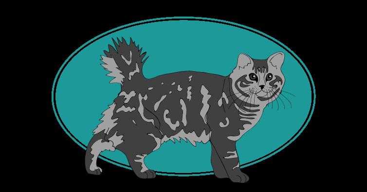 American Bobtail chat animal races : tout savoir sur les chats, races de chats