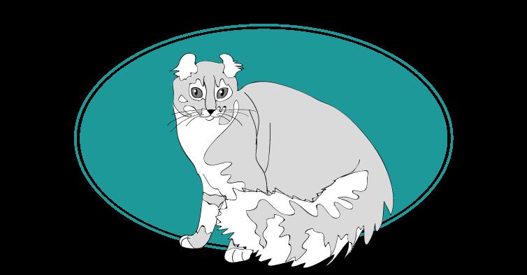 American Curl chat animal races : tout savoir sur les chats
