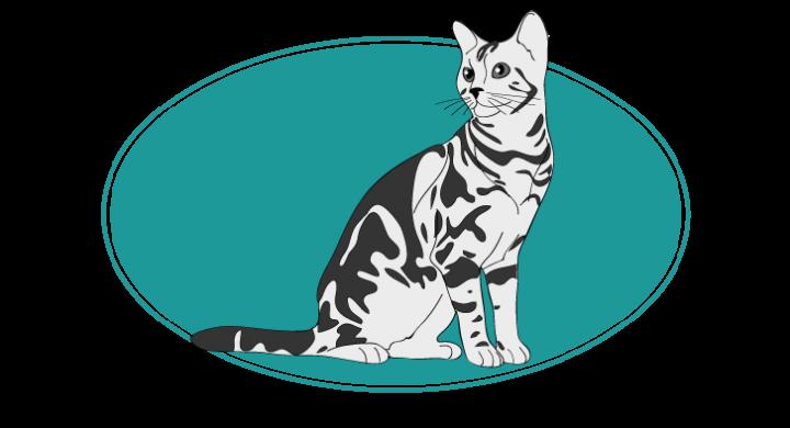 American shorthair chat animal races : tout savoir sur les chats