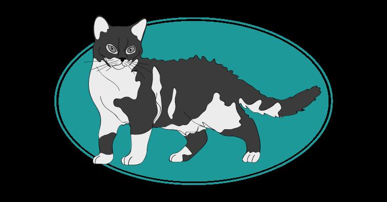 American Wirehair chat animal races : tout savoir sur les chats