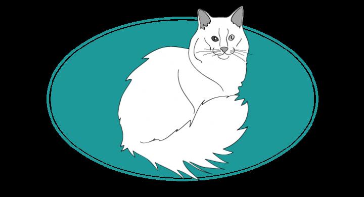 Angora turc chat animal races : tout savoir sur les chats