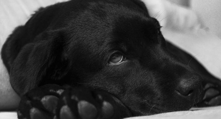 Mon animal epileptique : ce qu'il faut savoir