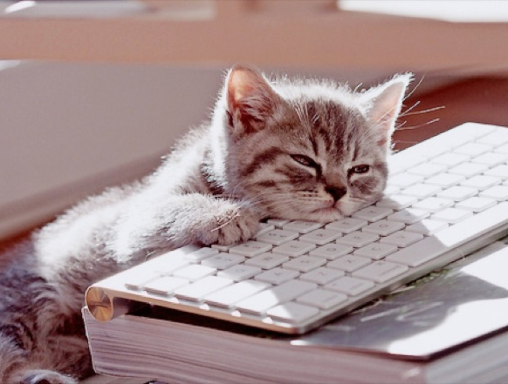 Animaux au travail : travailler avec les animaux