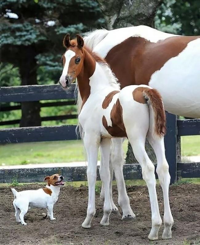 Animaux de compagnie insolite : Un chien et un cheval qui ressemblent à des jumeaux