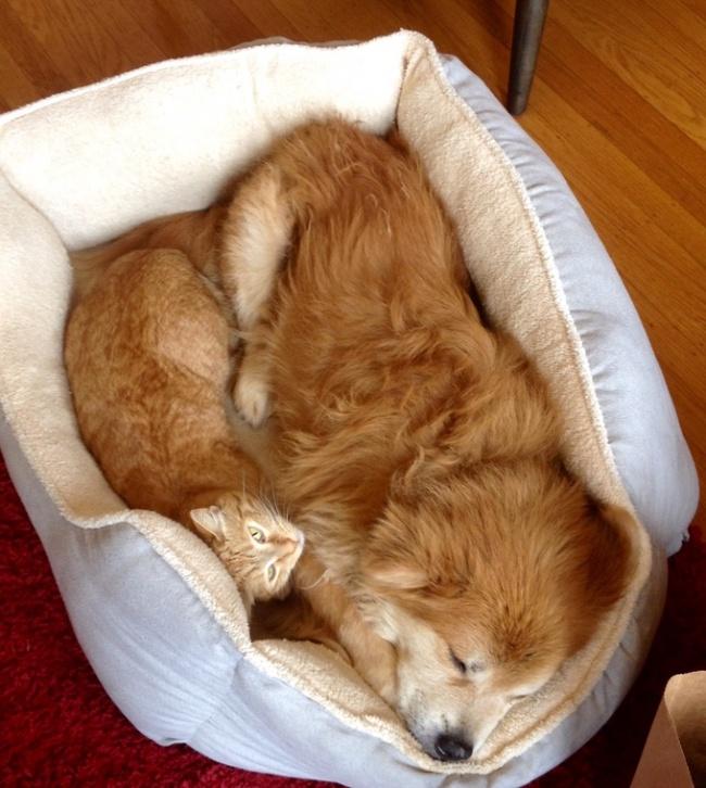 Animaux de compagnie insolite : Un couple de chien et chat dans leur panier qui se ressemble à des jumeaux