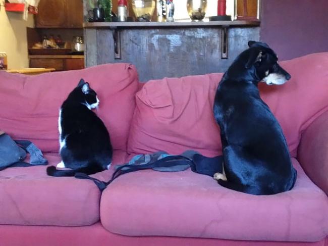 Animaux de compagnie insolite : Un chien et un chat qui ressemblent à des jumeaux
