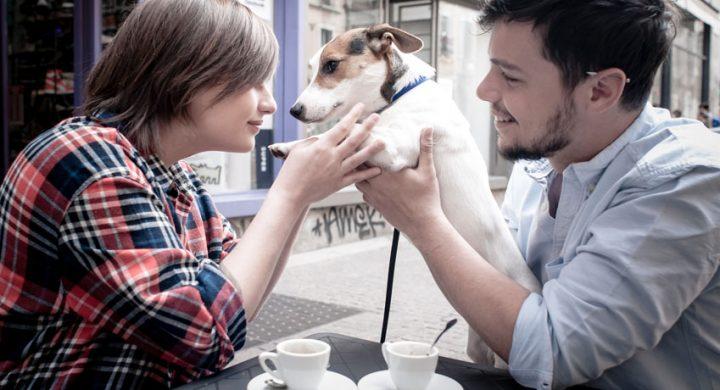 Actualité animaux : Sortir avec son animal est tendance, le pet friendly tendance