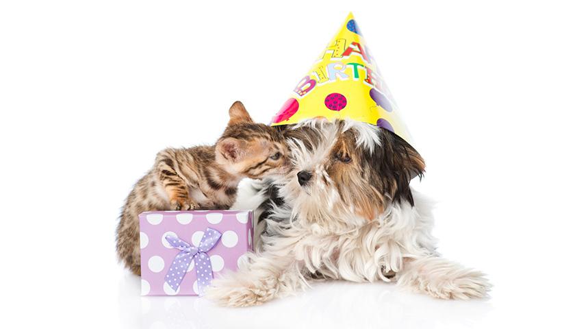 Anniversaire chien, anniversaire chat : 6 manière de feter l'anniversaire de son chien ou de son chat