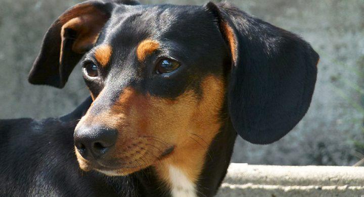 Assurance animaux : assurer son animal pourquoi les propriétaires qui hésitent