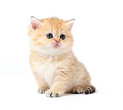 Mutuelle animaux : assurances animaux chat Assur O'Poil
