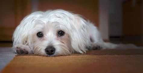 Assurer votre Animal : Mutuelle Animaux, Assur O' Poil