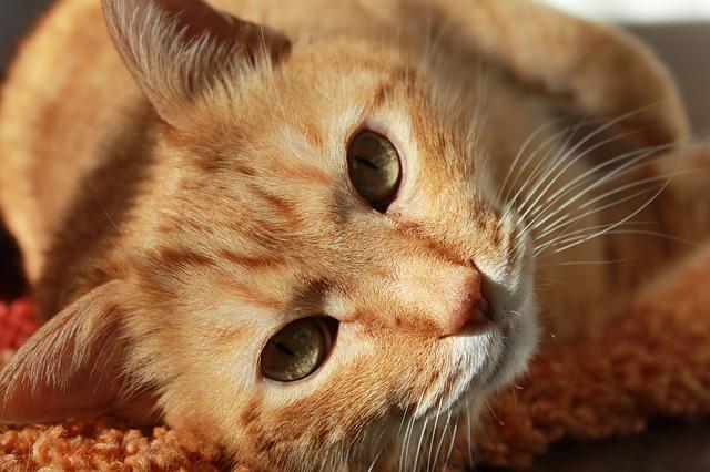 Assurer votre Animal : Mutuelle Animaux