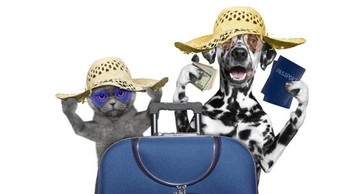 Assurance animaux : Les frais vétérinaires sont aussi remboursés à l'étranger, remboursement vétérinaire étranger