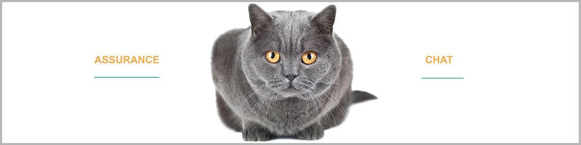 Assurance chat : assurer son chat