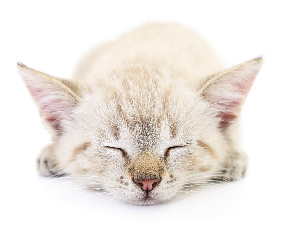 Assurance chat, mutuelle chien : assurer son chat pour une meilleure santé