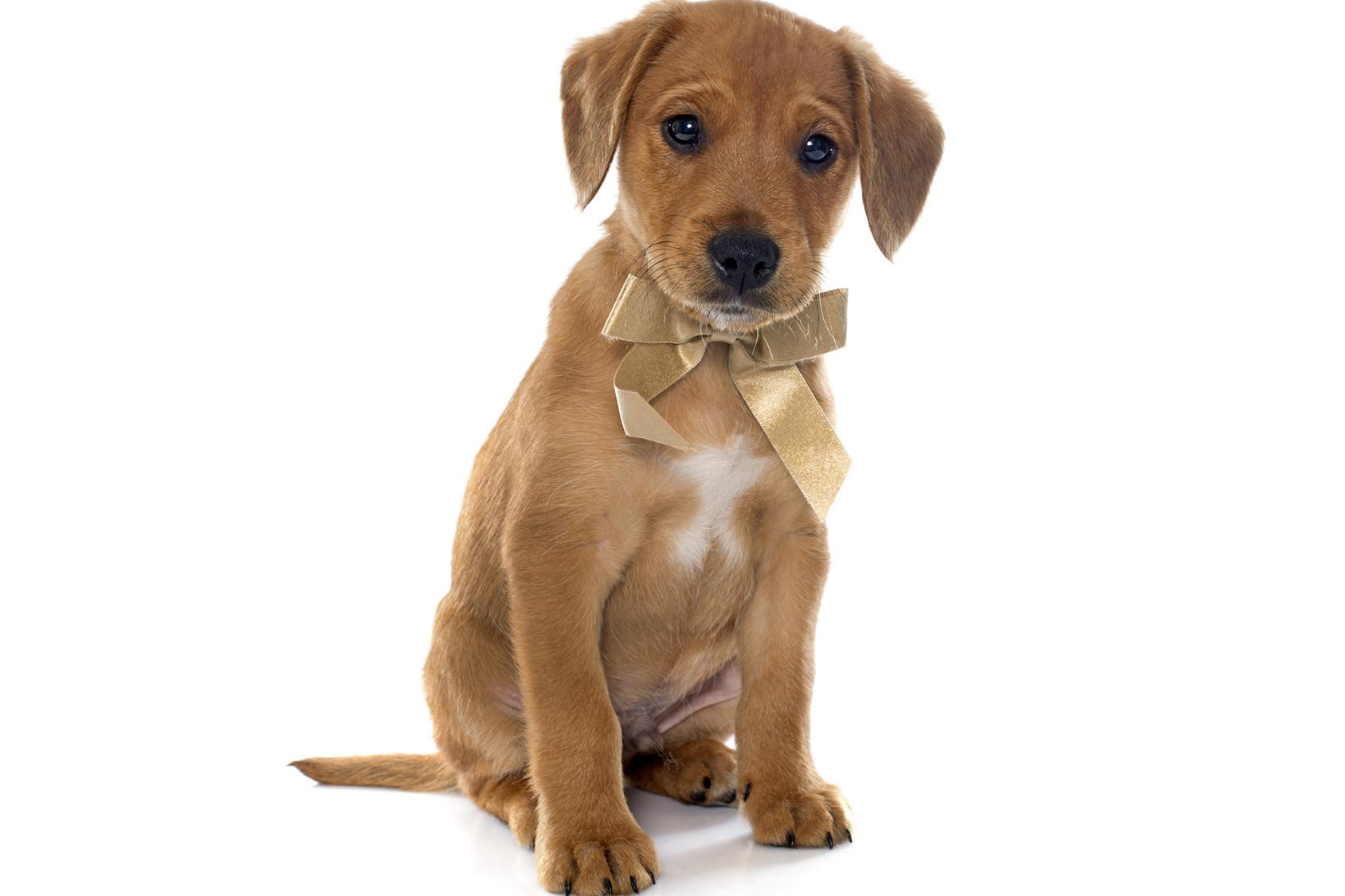 mutuelle et assurance chien pourquoi et comment assurer son chien. Black Bedroom Furniture Sets. Home Design Ideas