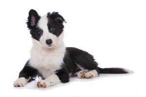 Assurance chien, mutuelle chien : assurer son chien, formule assurance chien