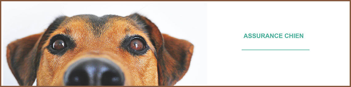 Assurance chien : assurer son chien