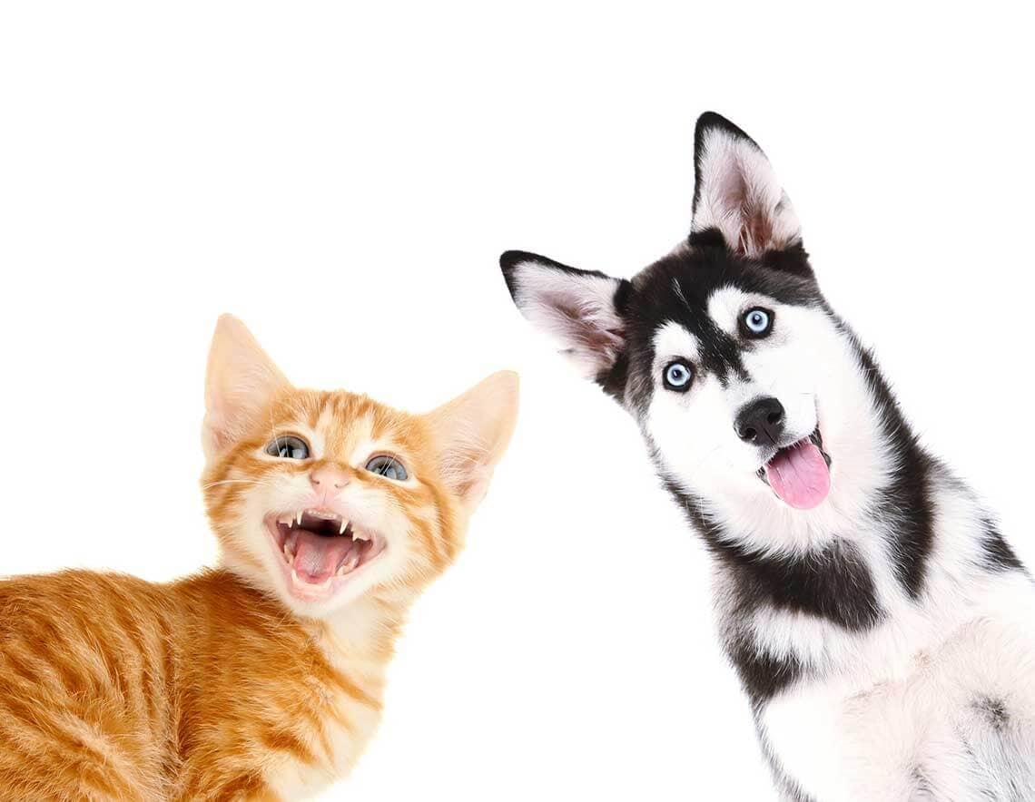 Assurance maladie animaux : fonctionnement et assurance