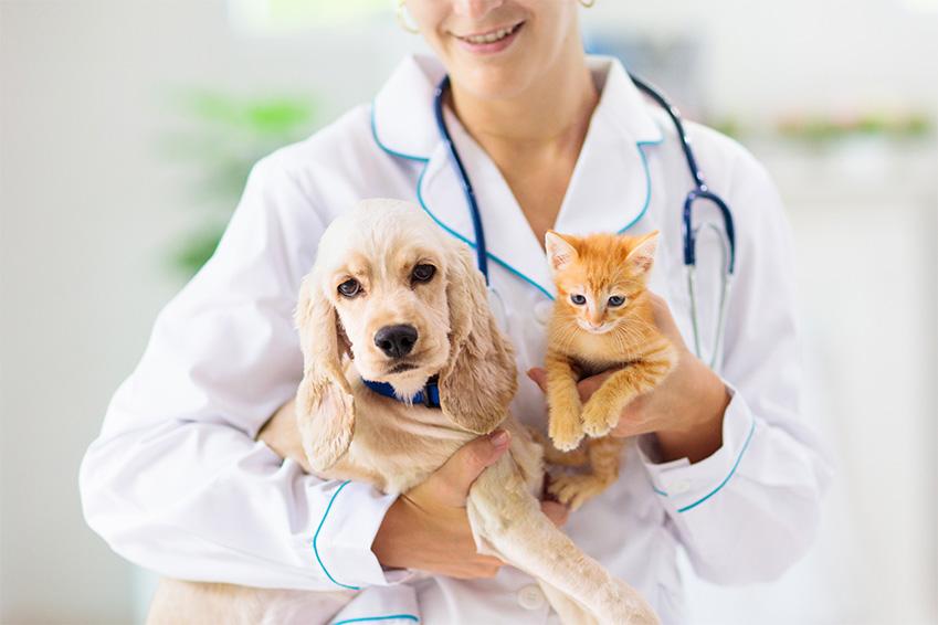 Assurance santé animale : le libre choix du vétérinaire