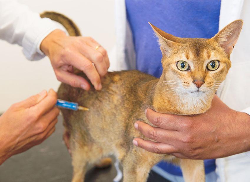 Assurances animaux : Protégez votre chat avec la vaccination